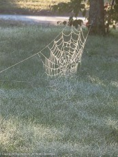 The fog has coated all the spider webs, and the sun is lighting that up.