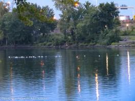 No ducks, no heron, but a bunch of gulls.