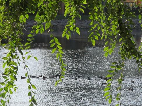 Ducks enjoying the sunshine.