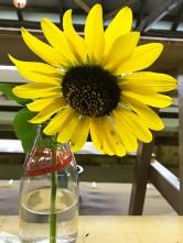 A winning sunflower.