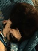 I did not wake MiMi. I'm learning.