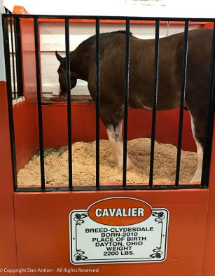 The Big-E still is an agricultural fair at heart.