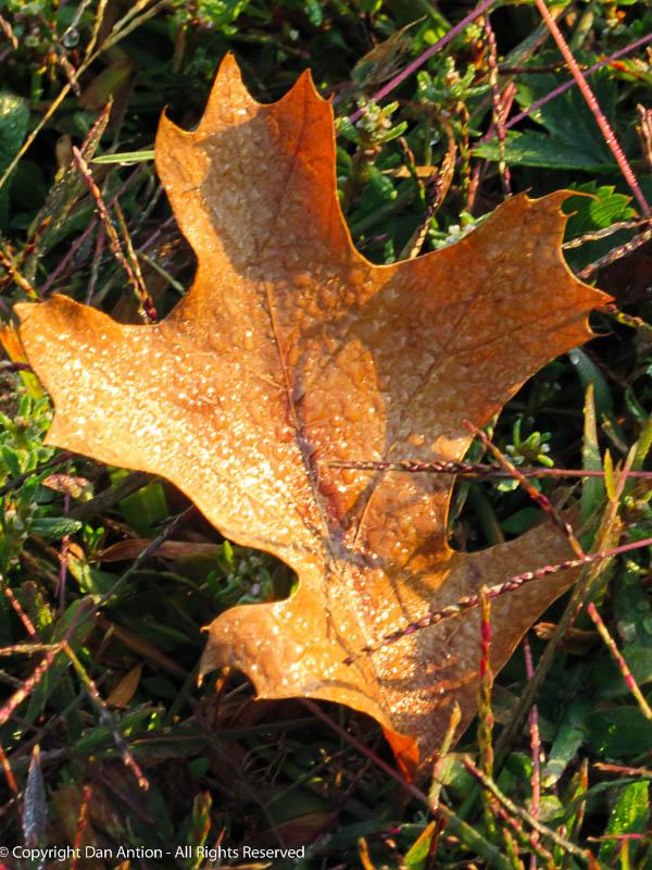 Autumn colors and a little moisture.