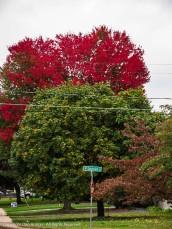 I do like the red trees.