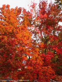 The fullness of fall color.