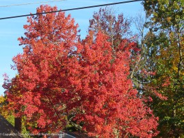 We don't have a lot of red trees. I love seeing them.