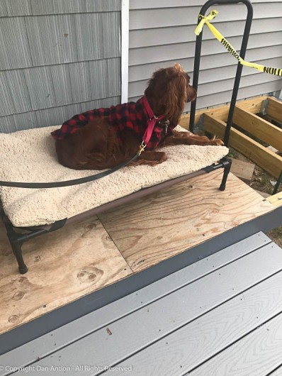 Maddie is home on her deck again. Weather permitting, this time next week, she will be enjoying a longer, nicer deck surface.