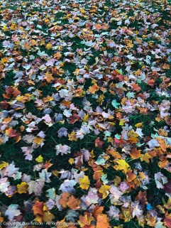 Fall's colorful carpet.