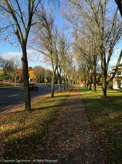 Walking back from our coffee run. These trees are bare and we have a carpet of leaves.