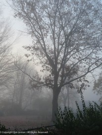 Suddenly this weekend, we were engulfed in fog.