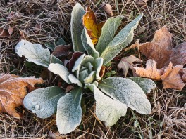 I don't know what this plant is, but the frost makes it stand out.
