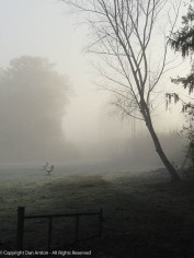The sun is starting to rise, but the fog is thick.