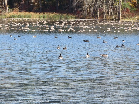 All of those spots are geese.
