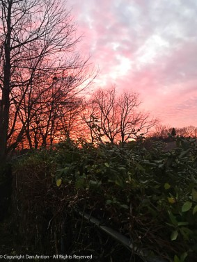 Red sky at morning. Looking over the honeysuckle.