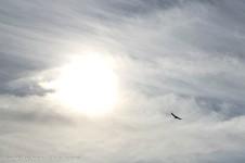 The sun was so bright, I wasn't sure I even had the hawk in the frame.
