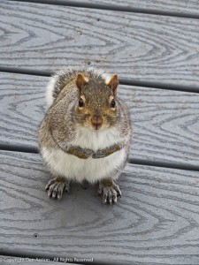 """Hi. I was wondering if you could bring a peanut out with you."""