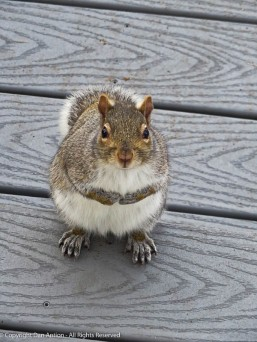 """""""Hi. I was wondering if you could bring a peanut out with you."""""""