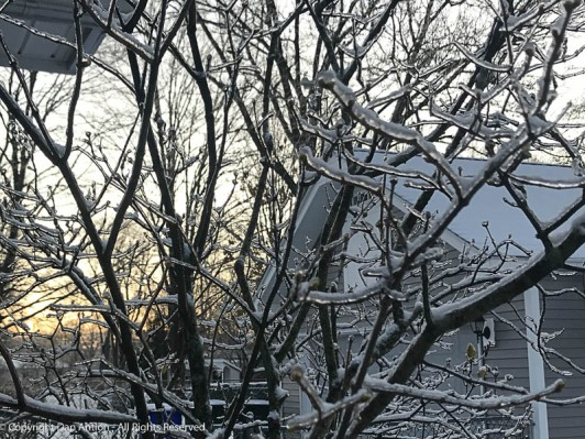 Lilac covered in ice.