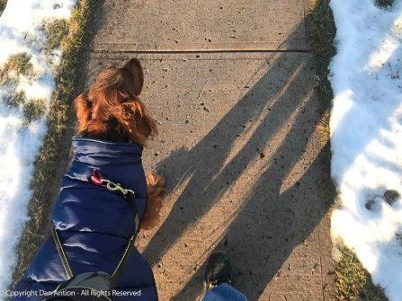 It was pretty cold at the time of our walk. This vest goes over Maddie's harness.