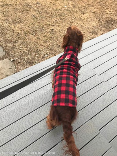 Maddie and I are going to sit for a while. It's chilly and cloudy, so she has her coat on.