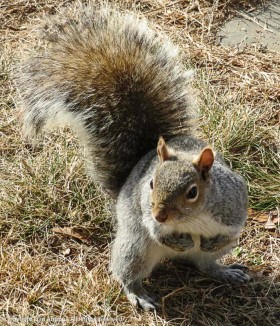 """""""Hi. I see you guys are sitting, but, um, did you bring some peanuts out with you?"""""""