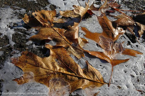 These poor leaves, fell late and didn't get raked up.