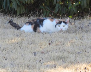 As we walked by, Maddie spied a cat who gave her the stink-eye.