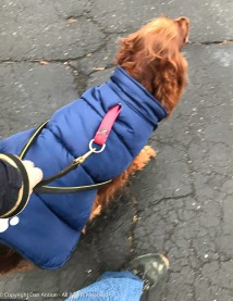 It was in the upper 20's on Sunday, so we bundled up for our walk.