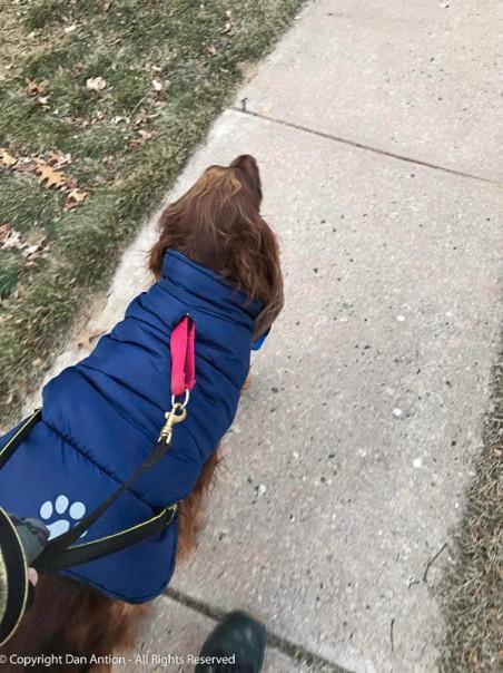We bundled up and we walked, despite the cold.