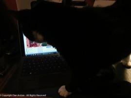 This is MuMu listening to Teagan's Novelette trailer.