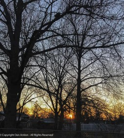 Once the leaves reappear, we don't get to see this sunset