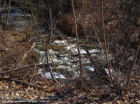 This little stream flows through a culvert under the road.
