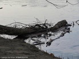 Debris decorates the shore.