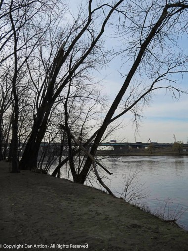 All of the trees lean heavily toward the river.