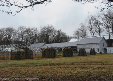 The hot houses are empty. I'm not sure if they will be used to start or store plants, or if this farm will be growing fewer plants this year.