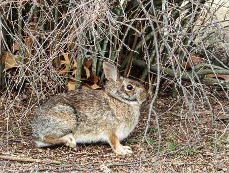 It's April 1st - Rabbit Rabbit!
