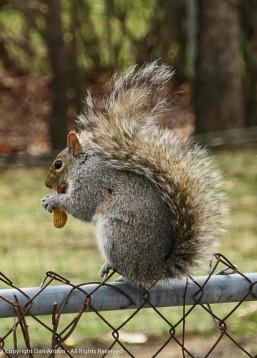 They do like the peanuts.