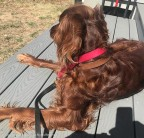 Maddie has been enjoying little periods of sitting once the deck warms up.