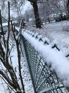 The fence looks good with the snow.