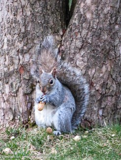 """""""Hey buddy, thanks for this peanut. It hits the spot."""""""