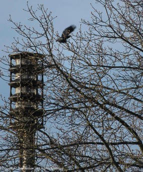 The crow was sitting on top of the public emergency address system speaker...until I pushed the shutter release.