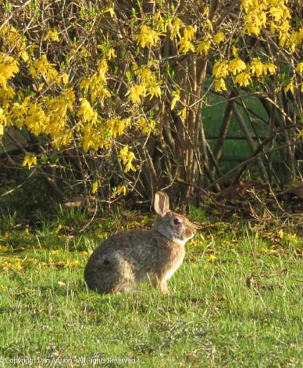 Bunny !!!