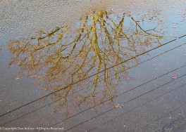 The puddle on the way home.