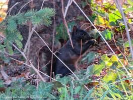 Smokey, hiding in the shade.