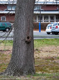 I saw a squirrel run up this tree, but where did he go.