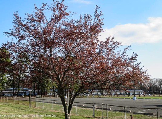 The trees at the park are blooming.