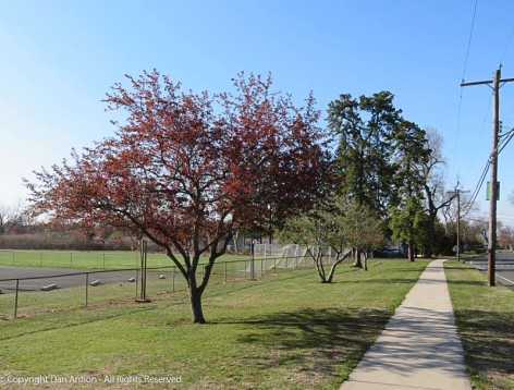 Maddie's park is getting ready for spring