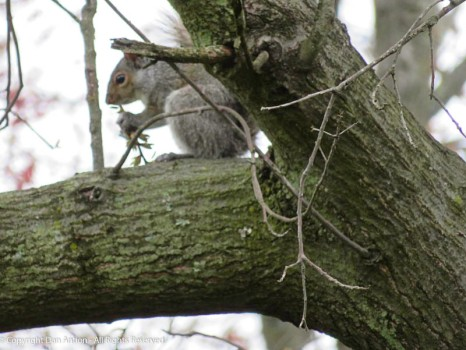 This little guy has been foraging. Good to see.