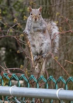 """Hey buddy. I've got a bunch of kids to feed. Can I get a peanut?"""