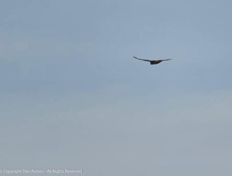 I love watching them glide along effortlessly.